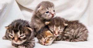 Kitten Growth Chart-Keeping-pet