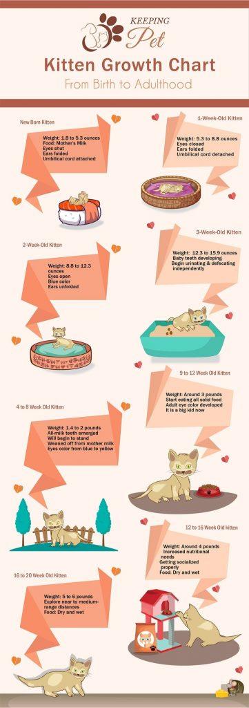 Kitten Growth Chart