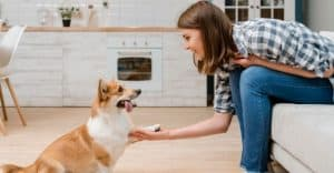 4 Most Effective Ways to Train Your Dog without Treats