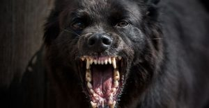 big guard dog breeds-keeping-pet