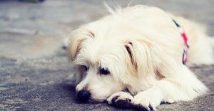 Dog Sickness-keeping-pet