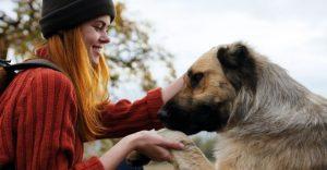 smartest-dog-breeds
