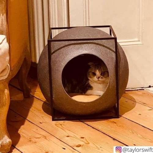 Meredith grey taylor swift cats