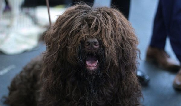Calmest Dog Breeds-keeping-pet-Pug
