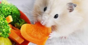 Can hamsters eat carrots-keeping-pet