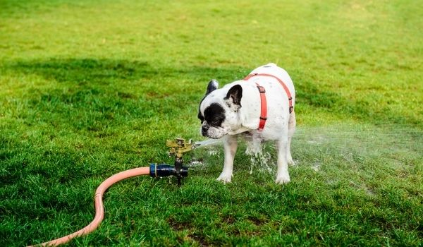 Cool Down Your Puppy in Hot Weather-Keeping-pet