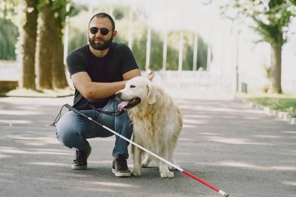 Labrador Retriever- Best Therapy Dogs