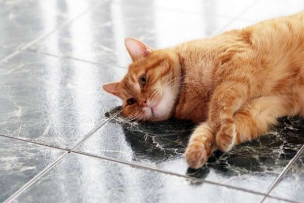 Signs Your Cat Is Dying