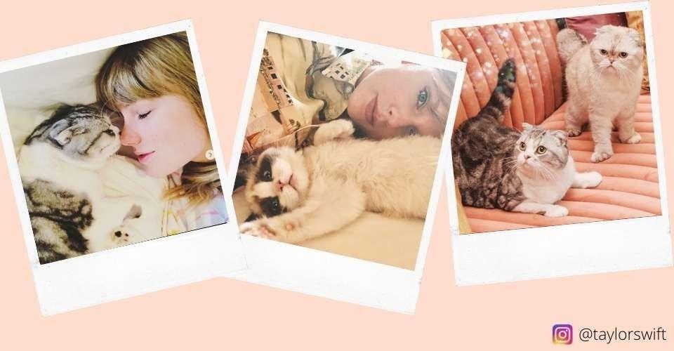 Taylor Swift Cats-keeping-cat
