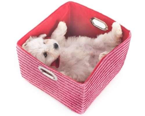 Teacup Maltese - teacup dog breeds