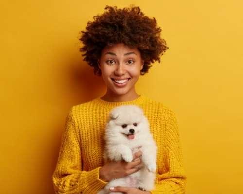 Teacup Pomeranian - teacup  dog breeds