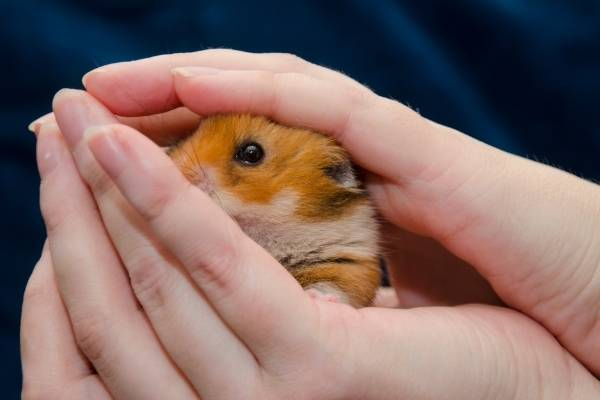 Why-Is-My-Hamster-Shaking-anxiety-and-fear