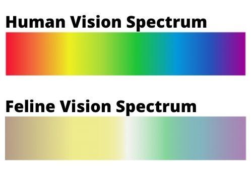 human vs feline vision