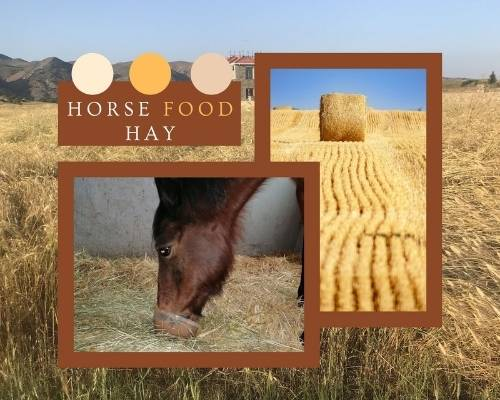 What Do Horses Eat - Hay