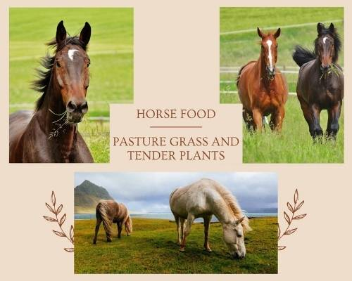 What Do Horses Eat - Pasture Grass and Tender Plants