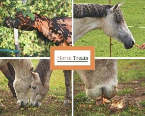 What Do Horses Eat - Treats