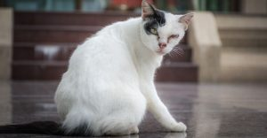 Down Syndrome Cat