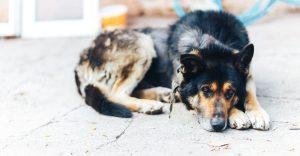 Flea Medicine for Dogs