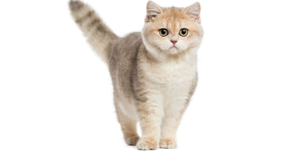 Best Cat Food for Sensitive Stomach