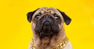 Cuban Link Dog Collars