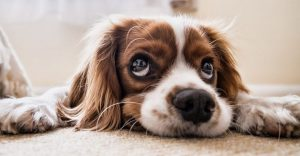 Dog Benadryl Dosage Chart