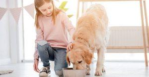 Dog Foods for Golden Retrievers