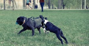 Dogs With Short Spine Syndrome