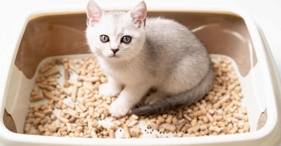How to Get Kitten to Use Litter Box