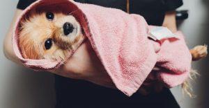 Flea Shampoo For Dogs