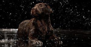 best dog grooming tubs