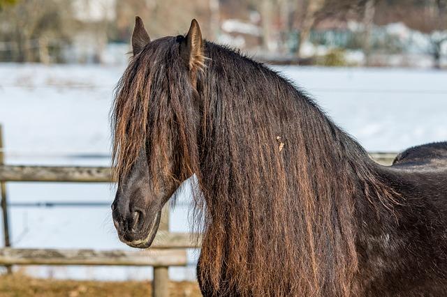 Fastest Horse Breeds
