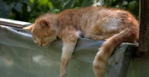 how-long-can-cats-go-without-food