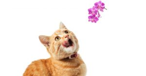 Are orchids poisonous to cats