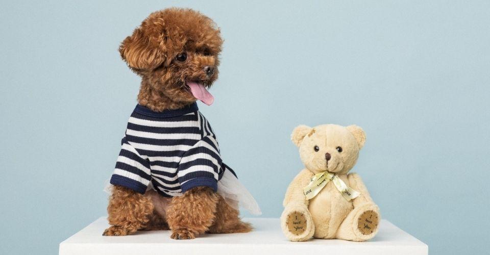 Best Hypoallergenic Dogs for Kids