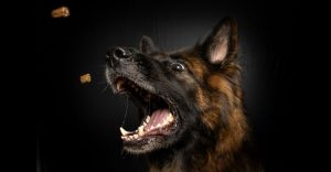 Dog Foods For German Shepherd
