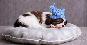 Dog barking in sleep