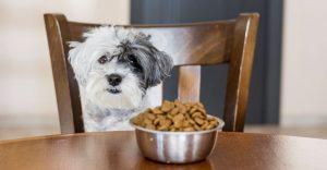 High Fiber Dog Food