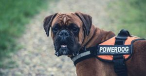 : How heavy should my dog be?