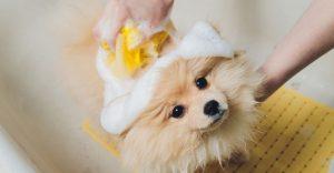 Oatmeal Dog Shampoos
