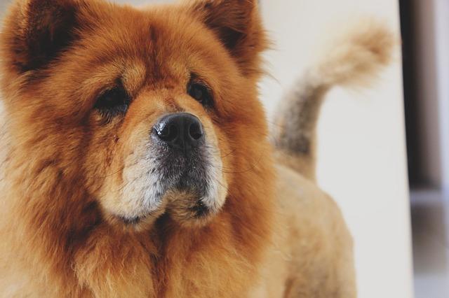 Red Dog Breeds