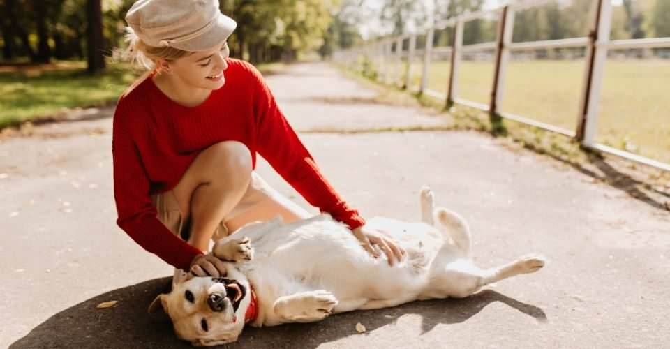 Are Dogs Ticklish-keeping-pet