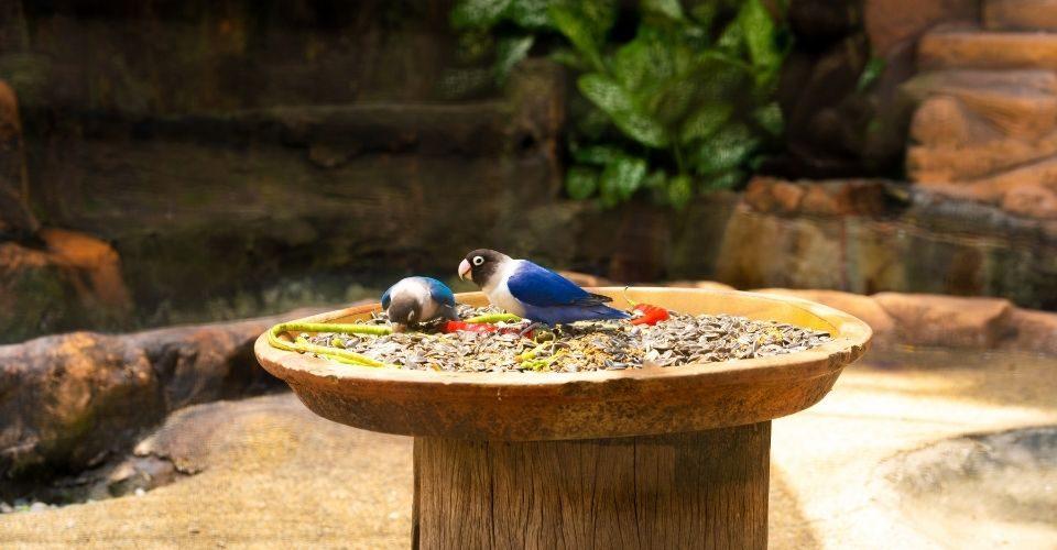 Best Parakeet Food - keeping pet