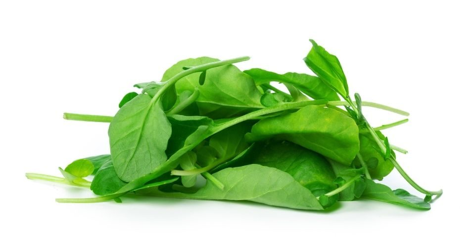 Can Cats Eat Spinach - keeping pet