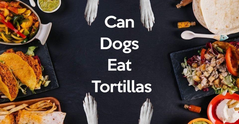 Can Dogs Eat Tortillas - keeping pet