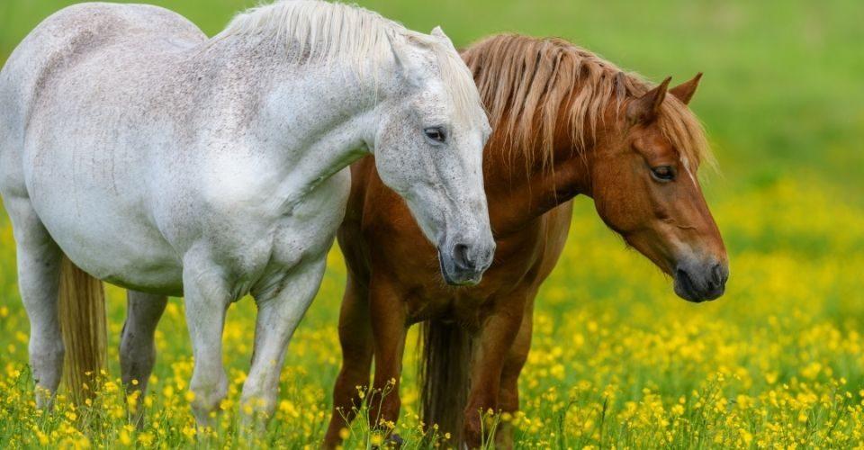 Can Horses Eat Cucumbers