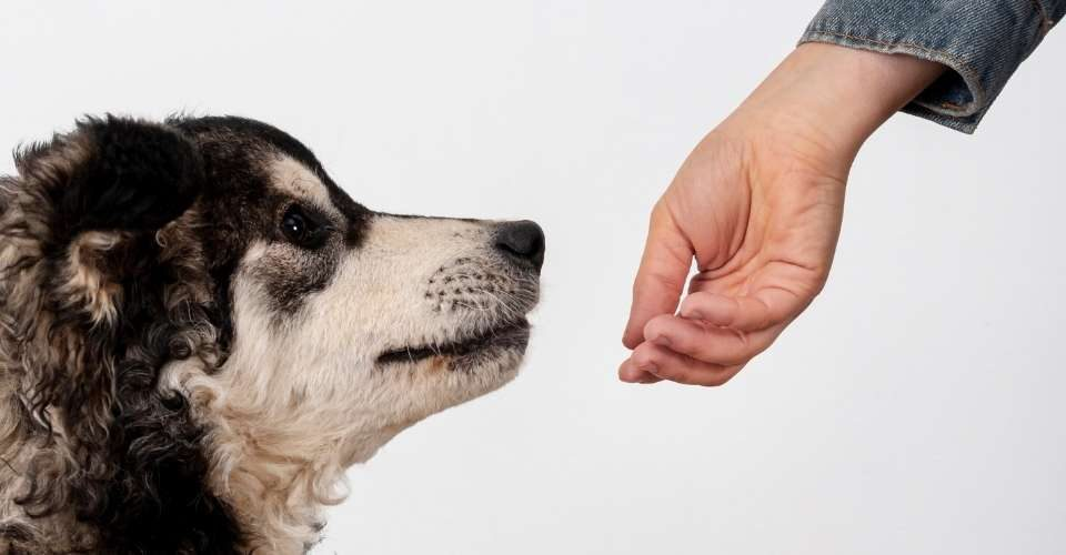 Dogs Sniffing Covid