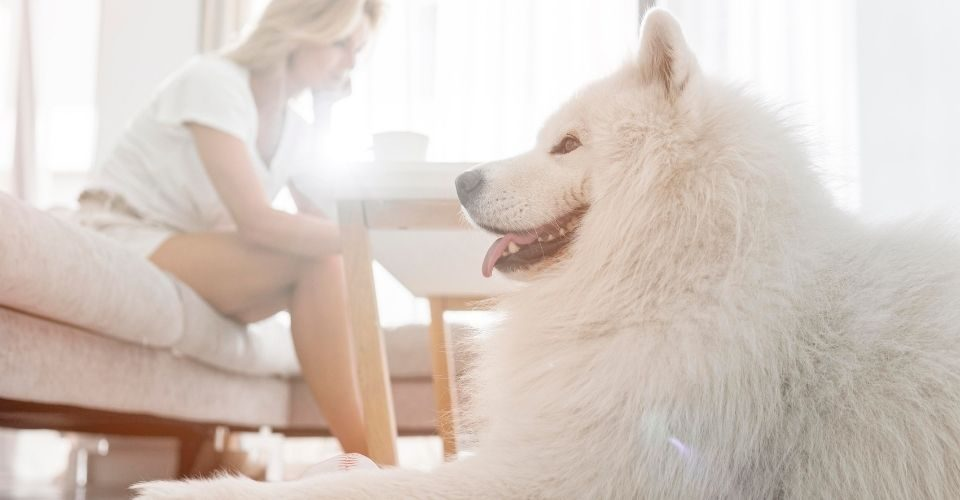 Big Hypoallergenic Dogs