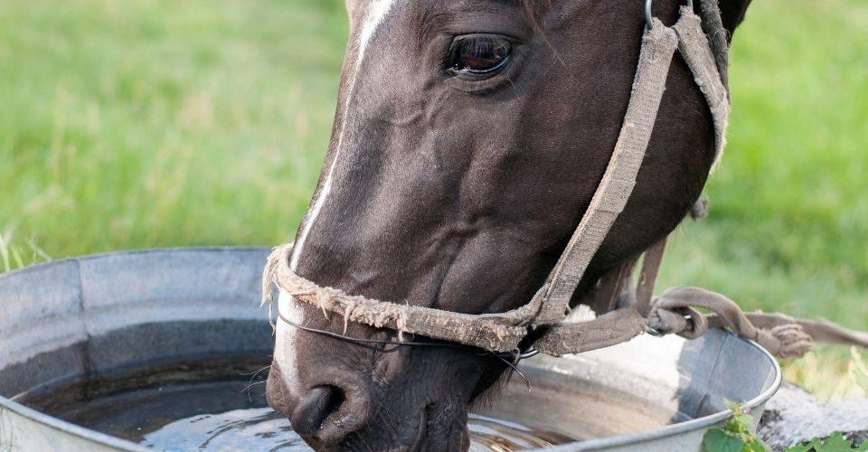 Horse Troughs