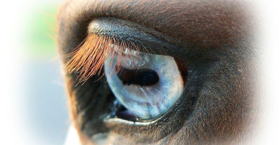 Horses with Blue Eyes