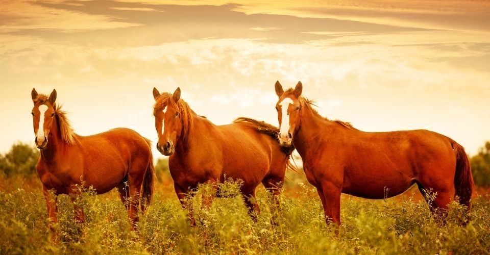 How long do horses live